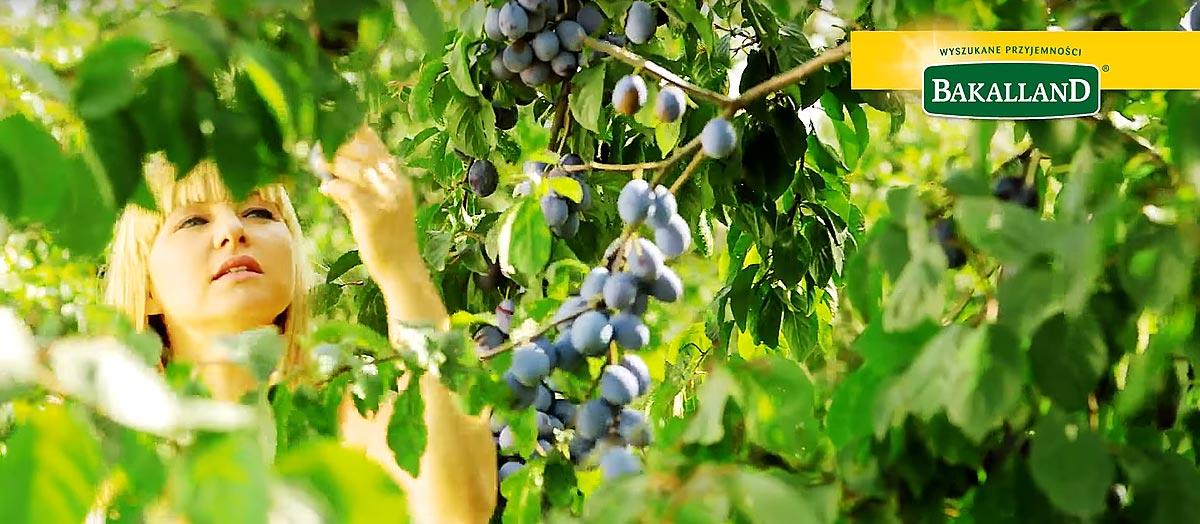 Śliwki Bakalland – Prosto z plantacji